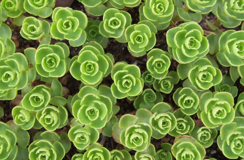 D couvrez les v g taux d 39 exception de la p pini re guervel for Plante grasse exterieur vivace